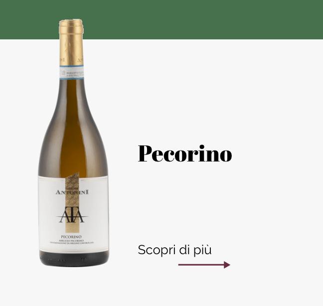 Cantina_Pecorino
